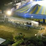 Tigri del circo