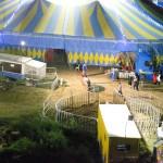 Elefante e ippopotamo circo